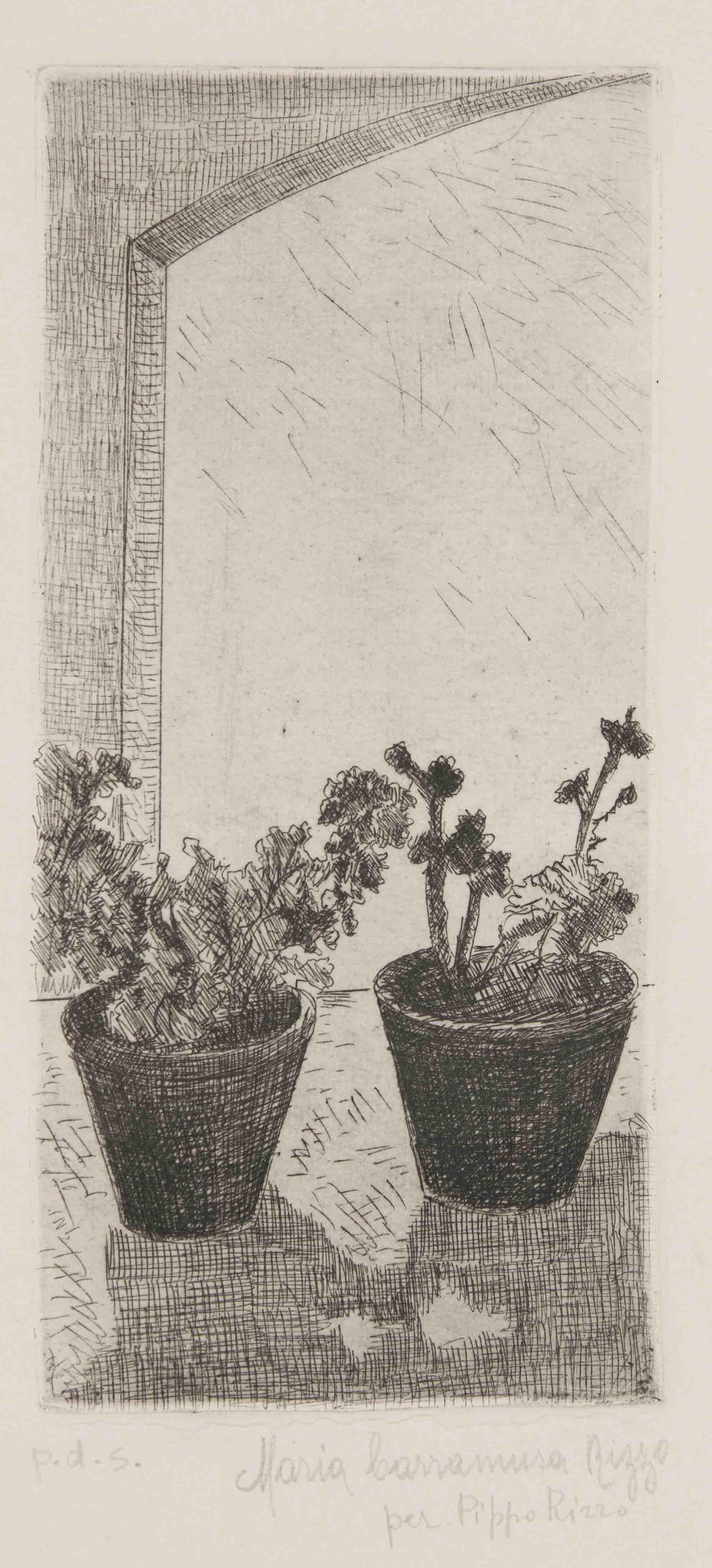 Vasi di piante pds